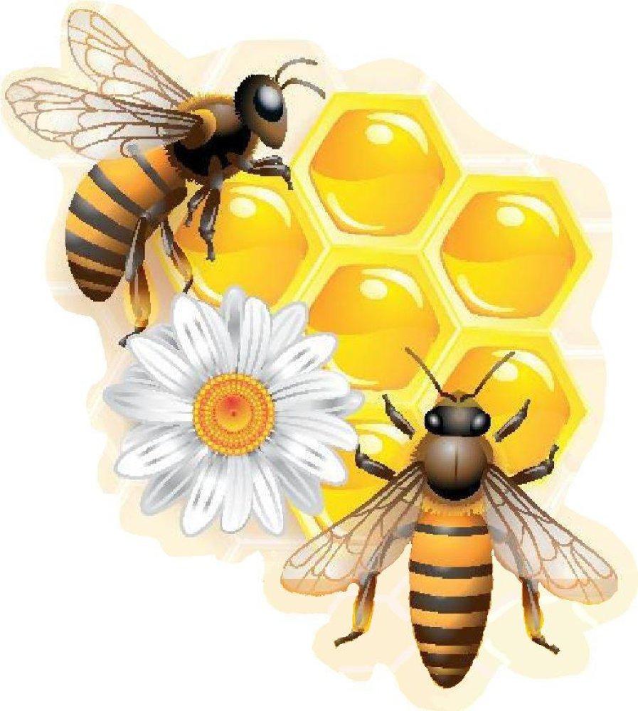 wissenswertes ber bienen und honig. Black Bedroom Furniture Sets. Home Design Ideas